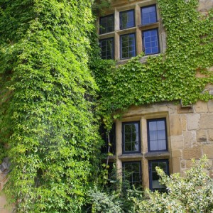 Mount Grace Priory 065